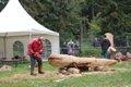 Tagen des Holzes