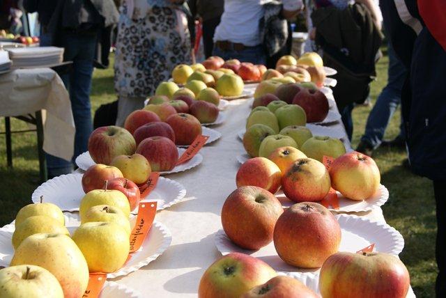 Der Sortentisch beim Apfelfest