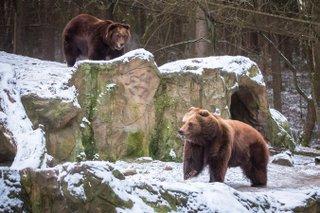 Kamtschatka-Bärenbrüder