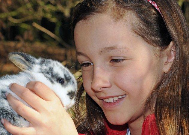 Kanninchen Tierpflegerprogramm