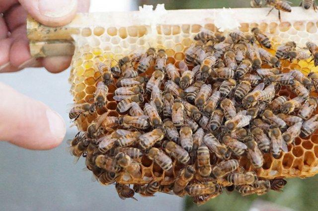 Honigerlebnis