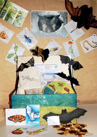 Fledermausaktion für Familien