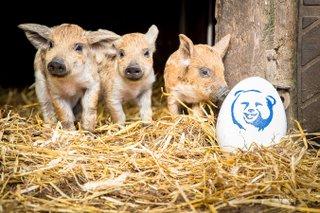 Spiel, Spaß und Spannung an Ostern
