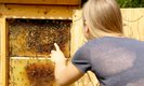 Wer findet die Bienenkoenigin