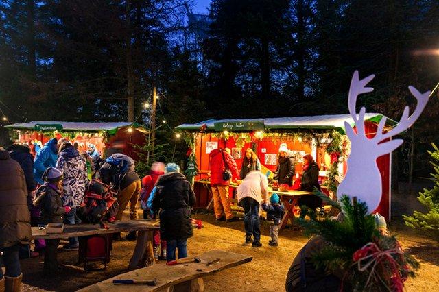 Auf in den Weihnachts-Wunder-Wald!