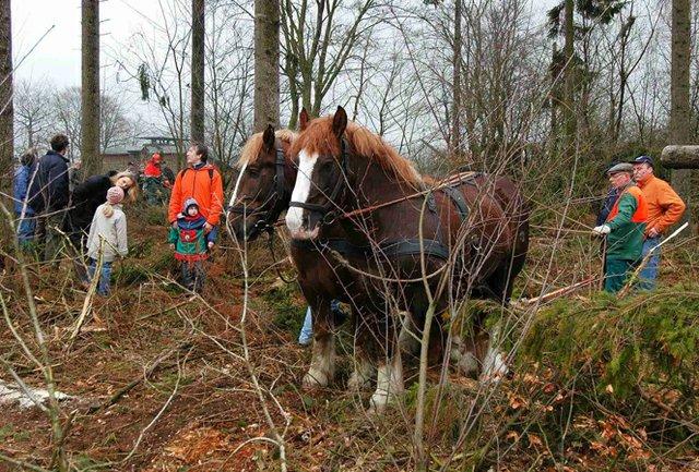 Forst SH Holzernte