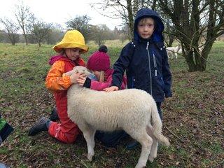 Bunte Schafswoche