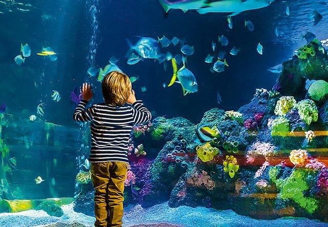 Kindergeburtstag-Sea-Life