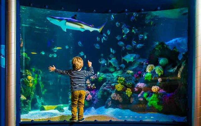 Junge vor Ozean