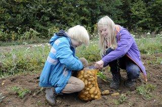 Kinder ernten Kartoffeln beim Herbstferienprogramm