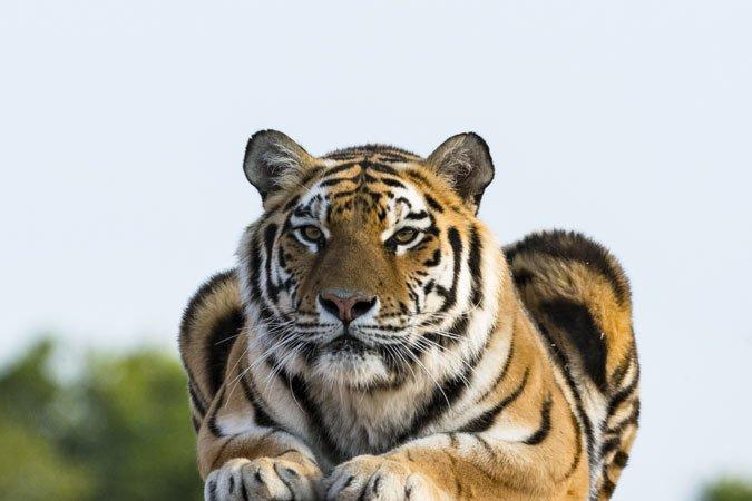 Erlebnis- & Tigerpark Dassow