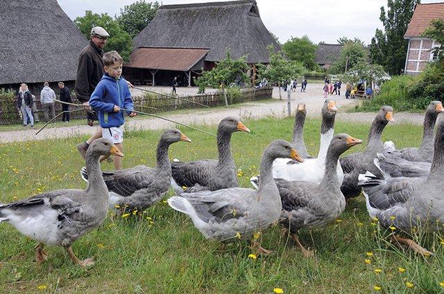Sommerspaß im Freilichtmuseum am Kiekeberg