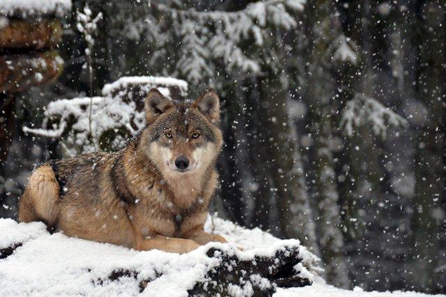 20. Eekholter Wolfsnächte!