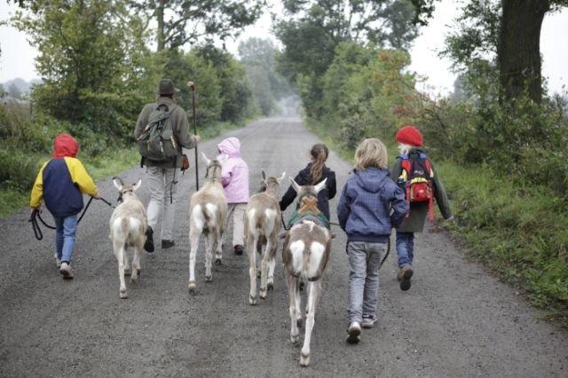 Ziegen-Trekking